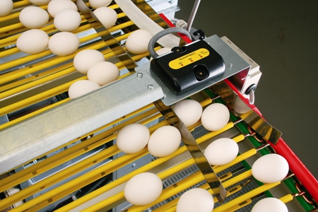 Counting eggs on rod conveyor